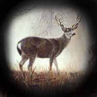 Big Game Hunts - B & D Outfitters - Deer Hunts