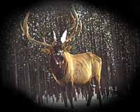 Big Game Hunts - B & D Outfitters - Elk Hunts